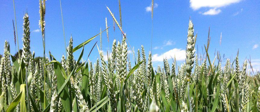 Biologische Landwirtschaft und Ernährung